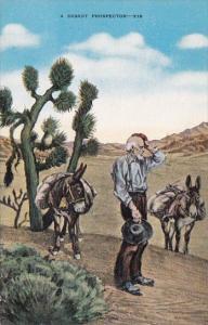 A Desert Prospector With Donkeys