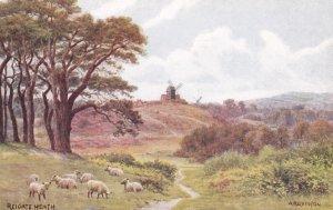 REIGATE, Surrey, England, 1900-1910s; Reigate Heath, Sheep