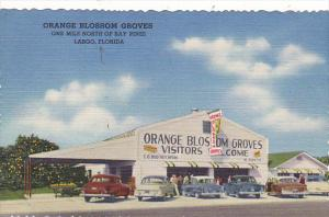 Florida Largo Orange Blossom Groves Fruit Stand Curteich
