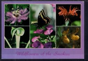 Wildflowers of the Great Smokey Mountains BIN