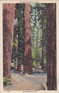 Washington Tacoma Rainier National Park Big Douglas Firs
