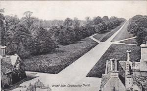 ENGLAND, 1900-1910's; Broad Ride, Cirencester Park
