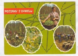 4-Views, Pozdrav Z Chmelu, Spring works on hops fields, Czech Republic, 50-70s