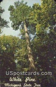 White Pine, Michigan State Tree in Misc, Michigan