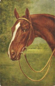 George Ranking. Head of a horse  Nice vintage Salmon postcard