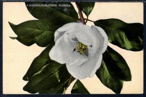 Magnolia Blossom,Flower,Florida