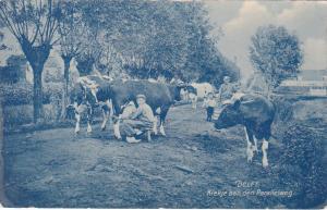 DELFT , Netherlands , 00-10s : Kiekje aan den Parallelweg, Cows