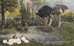 The Happy Family Cawston Ostrich Farm South Pasadenadena California