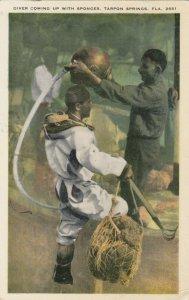 TARPON SPRINGS , Florida , 1910s ; Diver with sponges