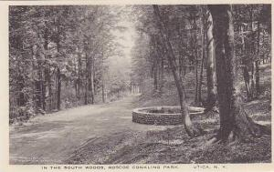 In The South Woods, Roscoe Conkling Park, Utica, New  York, 1910-1920s