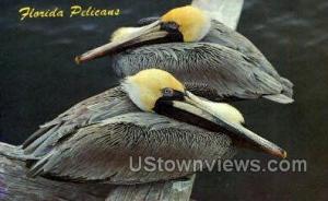 Pelicans Miami FL Unused