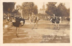 Los Angeles California birds eye view at the Ostrich Farm real photo pc BB1158