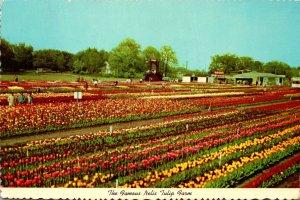 Michigan Holland Nelis Tulip Farm
