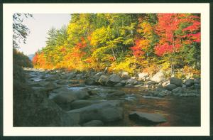 Swift River White Mountains New Hampshire NH Fall Foliage Scenery Postcard