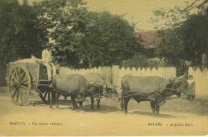 Havana Cuba Habana Un Carro Cubano Cuban Cart Oxen Child Vintage Postcard