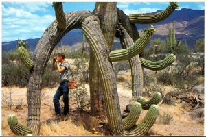 Arizona Saguaro Cactus Octopus Cactus