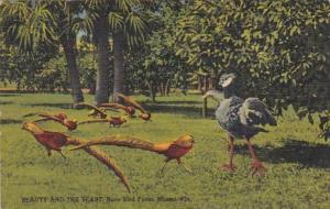 Florida Miami Rare Bird Farm Beauty and The Beast