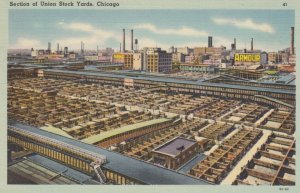 CHICAGO, Illinois, 1930-40s;  Union Stock Yards, Cattle # 4