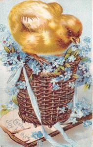 Easter~Fat Yellow Chick Squashes Blue Forget-Me-Nots in Basket~Silver Emb~IAPC