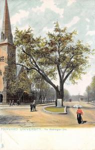 Cambridge Massachusetts~Harvard University~Washington Elm~1905 Postcard~TUCK