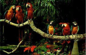 Postcard Parrot Jungle Near Miami Florida Birds Chrome Unposted 1537