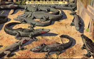 Florida An Alligator Farm In Sunny Florida