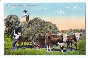 Old Orchard ME Postcard Farm Scene Hay Wagon Steer ca 1910