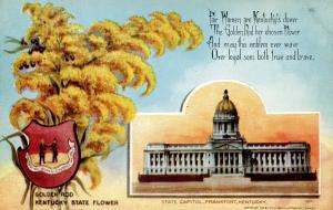 State Flower & Capitol - Kentucky, Golden Rod