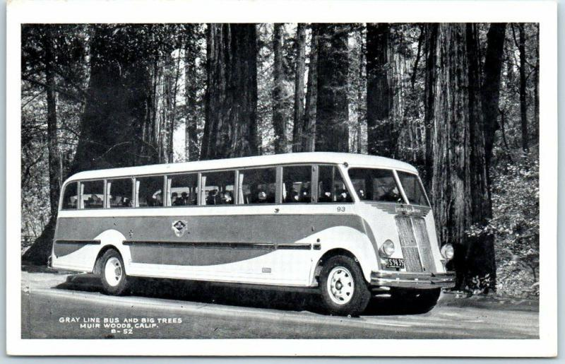 Vintage MUIR WOODS California Postcard Gray Line Bus & Big Trees c1940s Unused