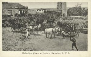 Barbados, B.W.I., Unloading Canes at Factory, Horse Cart (1930s)