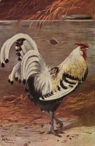 Chicken Hen Rooster, Bird Poultry Postcard (1912) Artist Signed (1)