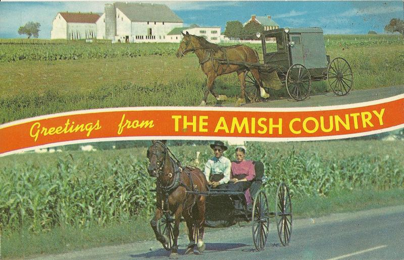 Greetings from Amish Country Postcard Farmer Horse Buggy PA