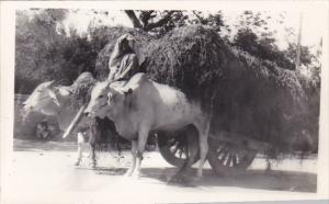 Pakistan Karachi Bullock Cart Real Photo