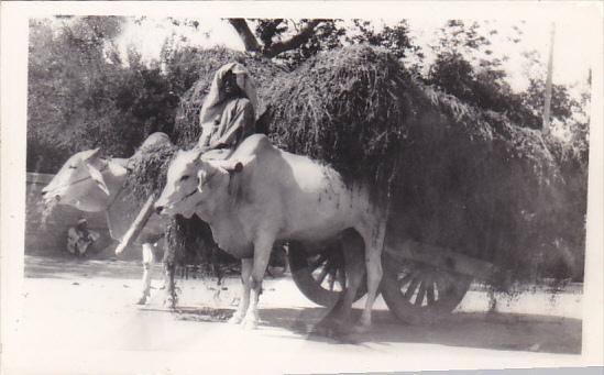 Pakistan Karachi Bullock Cart Real Photo