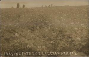 Alexandra ME Farming Spraying Potatoes ALEXANDER Postal Cancel RPPC 1912