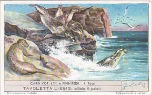 Liebig Trade Card S1586 Carnivores II No 4 Foca