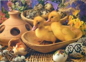 Postcard Easter greetings ducks paint decorated eggs