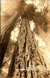 RPPC Ricerchi IN Su Presso Sequoie Muir Foresta California Ca Cartolina Unp