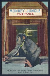Bulu the Monkey Jungle entrance Miami FL unused c1950
