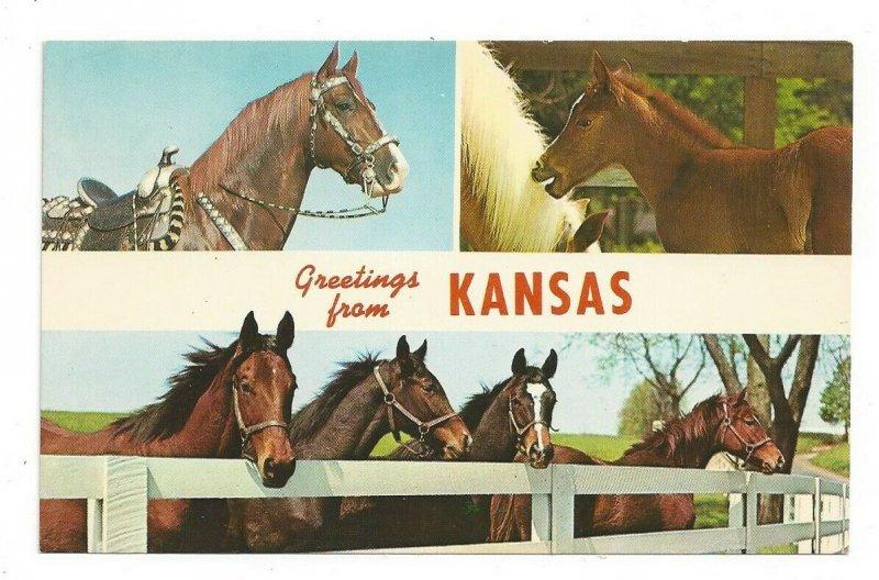 Postcard Greetings from Kansas Horses Standard Multi View Card