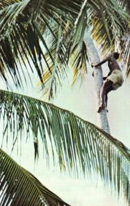 Vintage Postcard, Climbing for Coconuts near Kilwa Masoko Tanzania, Africa 23Q