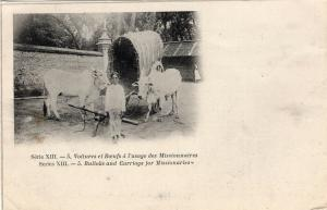 Africa Congo belge Bullocks and carriage for missionaries 01.31