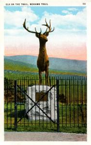 MA - Berkshires, Mohawk Trail. Elk on the Trail