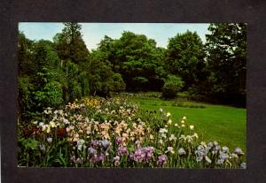 NJ Ringwood Manor Iris Garden State Park New Jersey Postcard Flowers