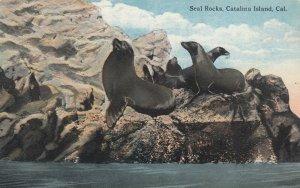 CATALINA ISLAND, California, 1900-10s; Seal Rocks