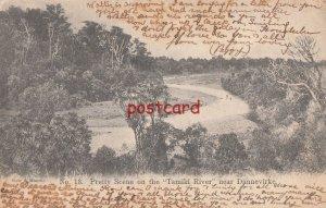 1907? NEW ZEALAND Tamiki River near Dannevirke, publ Muir & Moodie No. 13