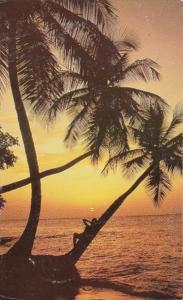 Hawaii Beautiful Tropical Sunset