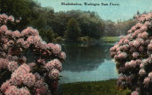 Rhododendron, Washington State Flower, WA, Divided Back Vintage Postcard g8246