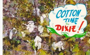 Cotton Bolls Cotton Time In Dixie
