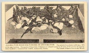Jacksonville Florida~Alligator Farm~Eggs Hatching in Incubator~1920s